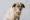 dog portrait in downtown dayton studio